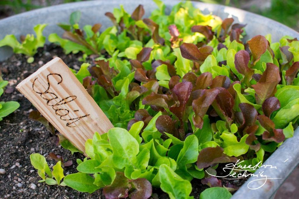 Dřevěné cedulky na bylinky. Jak vyrobit zápich k bylinkám DIY. Dřevěné cedulky k bylinkám. Zápichy k bylinkám. Zápichy do květináče. Zápich do květináče návod.Zápichy na bylinky. Zápichy do truhlíků. Zápichy do zahrady, Zahradní zápichy. Cedulky na bylinky. Cedulky k bylinkám. Jmenovky na bylinky. Jmenovky k bylinkám Jak vyrobit zápichy jmenovky na bylinky. Jak vyrobit zápichy k bylinkám. Štítky na bylinky. Bylinkové jmenovky. Dekorace do květináče. Bylinkový záhon.Truhlík na bylinky. Pěstování bylinek. Bylinky. Květináč na bylinky. Bylinková zahrádka. Bylinková spirála. Květináče na bylinky