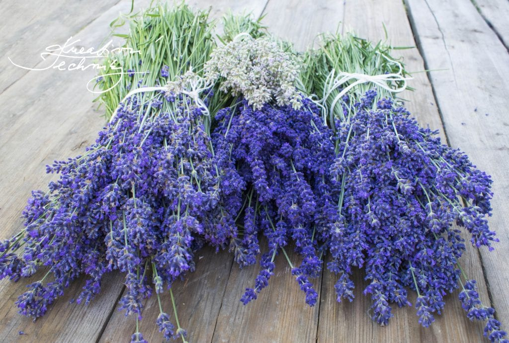 lavender aesthetic, lavender aesthetic, lavender plant care, diy lavender decor, lavender bouquet, lavender, lavender flower, growing lavender, dried lavender bouquet, dried lavender bouquet decor, lavender bouquet decoration, lavender plant uses, rose and lavender bouquet, lavender decor, lavender decorations, lavender decorations home, lavender decor home, dried lavender decor, dried lavender decoration, how to grow lavender, lavender plant care, Drying lavender, Collecting lavender,