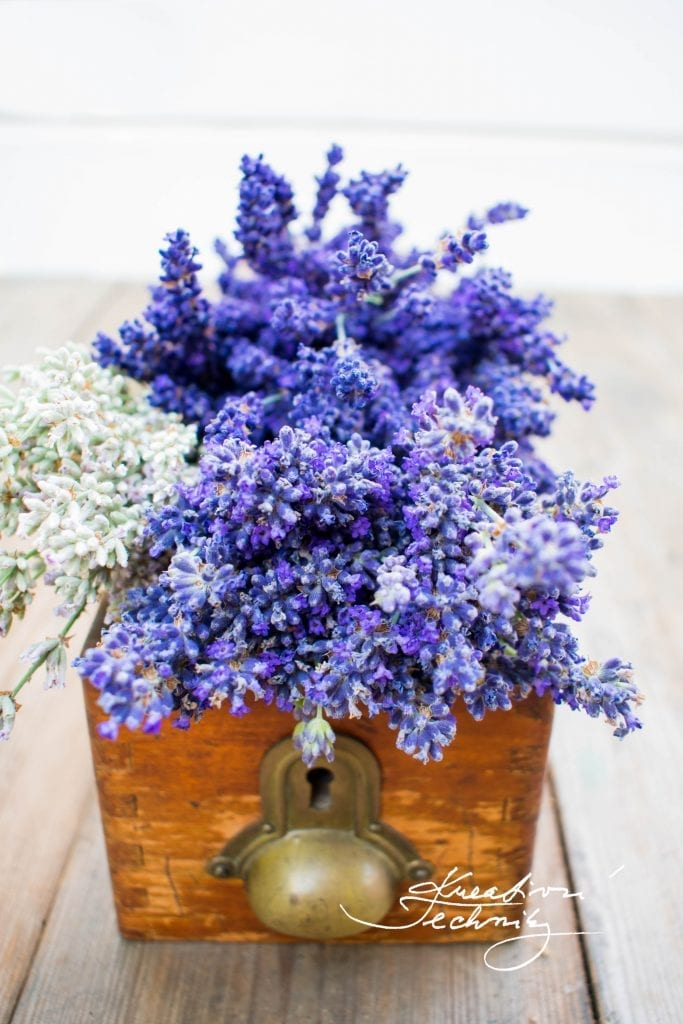lavender aesthetic, lavender aesthetic, lavender plant care, diy lavender decor, lavender bouquet, lavender, lavender flower, growing lavender, dried lavender bouquet, dried lavender bouquet decor, lavender bouquet decoration, lavender plant uses, rose and lavender bouquet, lavender decor, lavender decorations, lavender decorations home, lavender decor home, dried lavender decor, dried lavender decoration,