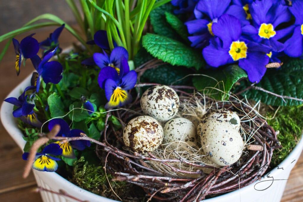 Jarní dekorace inspirace. Velikonoční dekorace. Velikonoční tvoření. Velikonoční výzdoba. Velikonoční vajíčka. Modré jarní květiny. Co kvete na jaře. Fialové jarní květiny. Narcis. Cibuloviny. Kvetoucí jarní květiny. Jarní květiny tvoření. Jarní květiny. První jarní květiny. Žluté jarní květiny. Žlutá jarní květina. Jarní květina. Jarní květiny na zahrádce. Jarní kvetoucí květiny. Velikonoce. DIY návody. Jarní dekorace z břízy. Jarní dekorace. Bříza. Z břízy. Březové proutí. Z březového proutí. Z břízy. Křepelčí vajíčka. Jarní výzdoba. Jarní dekorace. Výroba jarní dekorace. Jarní dekorace do bytu. Jarní dekorace domácí výroba. Jarní a velikonoční dekorace. Výroba jarních dekorací. Jarní dekorace tvoření. Výroba jarní dekorace. Jarní dekorace do bytu. Jarní dekorace domácí výroba. Jarní a velikonoční dekorace. Výroba jarních dekorací. Jarní dekorace tvoření.